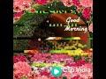 download lagu 💖💖💖So lovli 🌺🌺good morning 💙status gratis