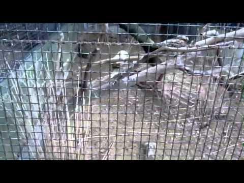 Голову на боку держит попугай