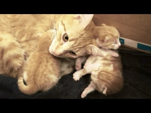 Mama Cat Talks to her Baby Kittens