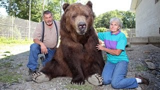 VIDEO: Our Son Is A 1400lb Kodiak Bear