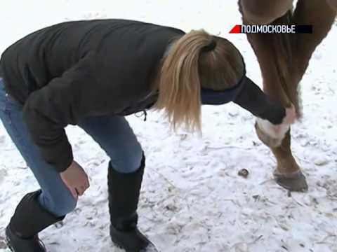 Племенных лошадей отдают на мясо