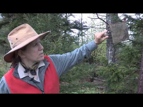 Part3: Pollinator Plantings (The Bee Module) for Maine Lowbush Blueberry