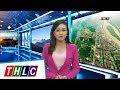 Thời sự Lào Cai trưa 29/9/2017 | THLC thumbnail