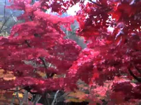 青森県黒石市中野もみじ山の紅葉