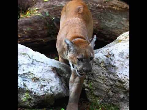 Homosassa Springs Wildlife State Park.wmv