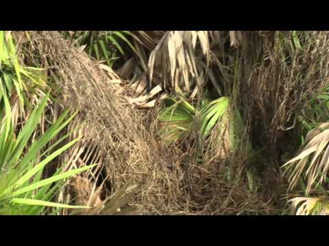 Central Florida Gardening   Urban Ecosystem Management