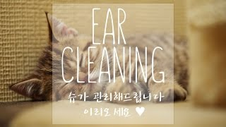 (Binaural ASMR)잠 안오는밤 귀청소와 귀마사지/Ear cleaning/Korean ASMR/Ear Massage