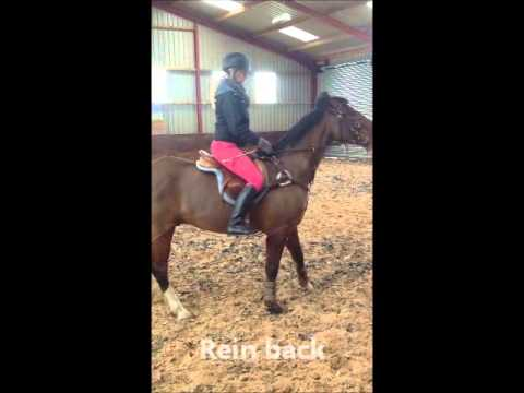 Chelsea Jones. G.C.S.E. pe horse riding video.