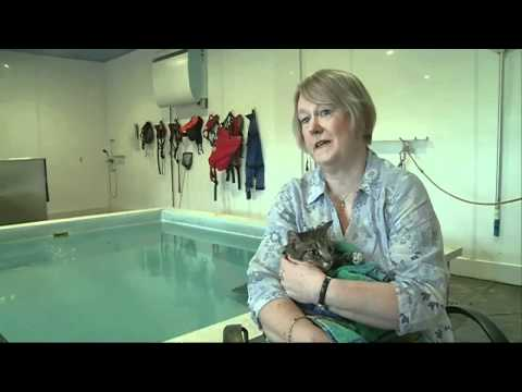 Paralysed Cat Takes Swimming Lessons video