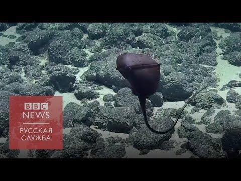Ученые засняли на видео очень странную рыбу