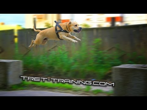 Super Dog Training video