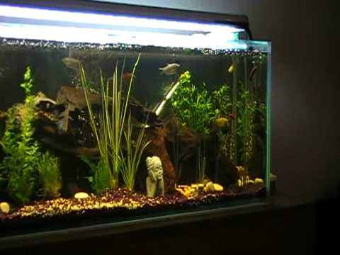 fish tank pauls 55 gallon 200 litre fresh water tropical youtube. Black Bedroom Furniture Sets. Home Design Ideas