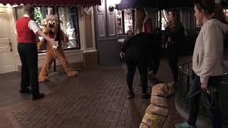 Pluto meets puppy at Disneyland