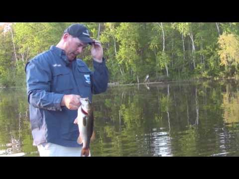 How to Fish for Postspawn Largemouth Bass -wisconsin tournament bass fishing strategy senko