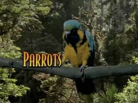 Parrots - Look Who's Talking [THE COMPLETE DOCUMENTARY]