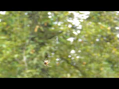 Spider Web 50x HD-1080p