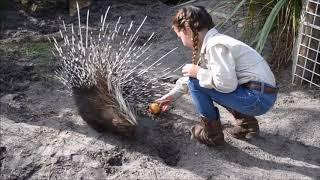 African Porcupine Enrichment