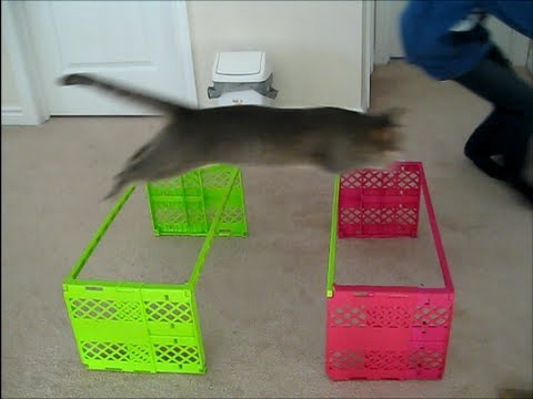 THE BEST OF CAT AGILITY- Hate on Me