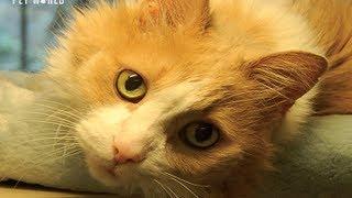 Steve Dale: Hyperthyroid Cats