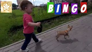 Bingo Dog Song | Kids Songs & Nursery Rhymes | Little Baby playing with a puppy mini doggy dog ося