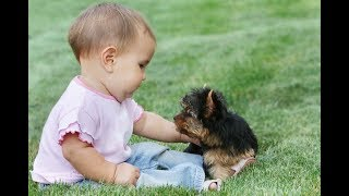 Funny and Cute Yorkie Dog and Babies Videos -  Dog and Baby Compilation