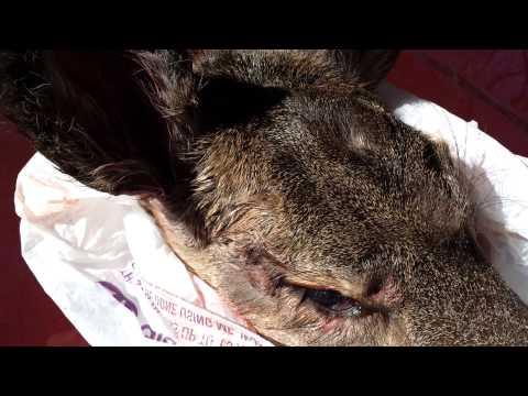 Benjamin Marauder .25 Deer Hunt