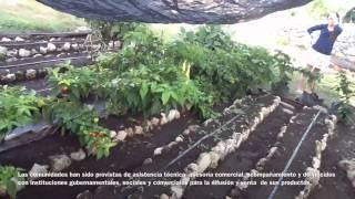 Proyecto Marista de huertos orgánicos