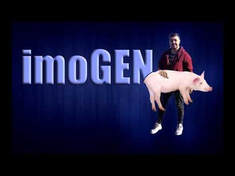 imoGen - neveu unde e porcul