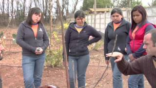 Cultivo de frutales de bajo requerimiento hídrico - CEZA UCHILE