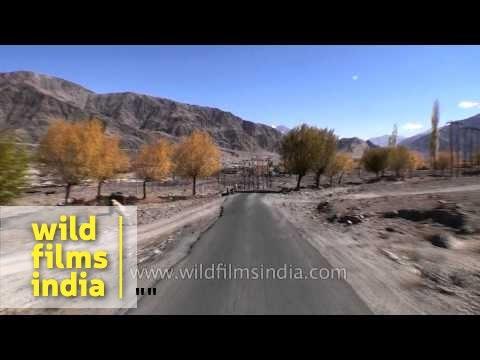 Ladakh driving video: Hemis valley stupas to Indus river bridge at Karu