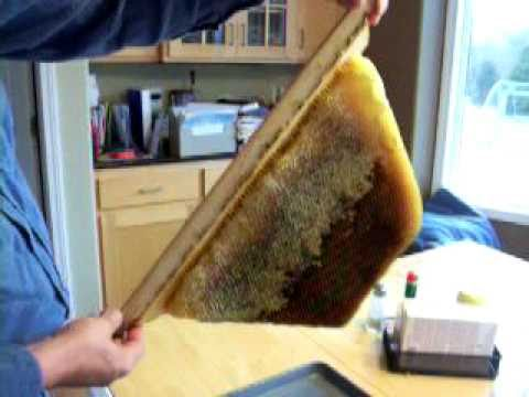 Extracting Honey From A Top Bar Hive