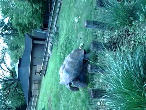 Animal Porn Turtle Love video