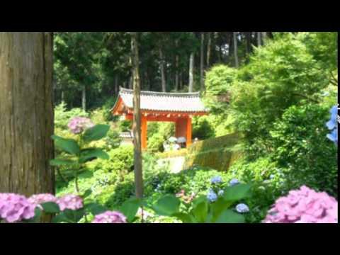 北の富士勝昭の画像 p1_16
