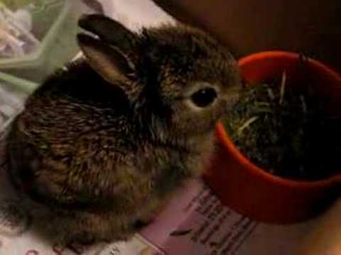 5 Baby Rabbit Photos That Are Too Adorable For Words
