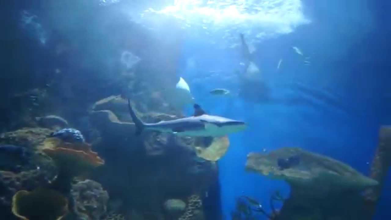 fakieh aquarium @ jeddah saudi arabia - YouTube