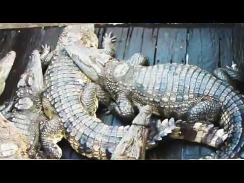 Cambodia & Bangkok 2012