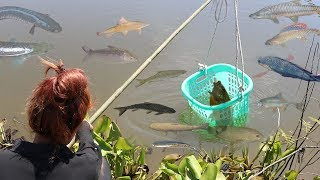 Amazing Smart Girl Catch A Lot Of Fish Using Basket - How to catch small fish with Basket