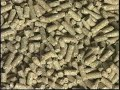 Clique e veja os vídeos da área Criação de Ovinos