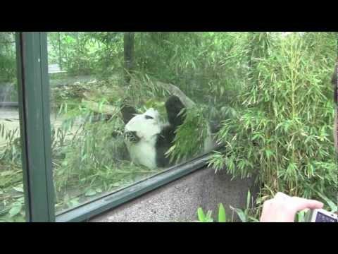 Zoologischer Garten Berlin / The Berlin Zoological Garden - 3rd July, 2012 (1080 HD)