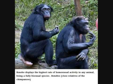 Homosexuality In The Animal Kingdom Part 1 [warning Animals Engaging In Homosexual Acts] video