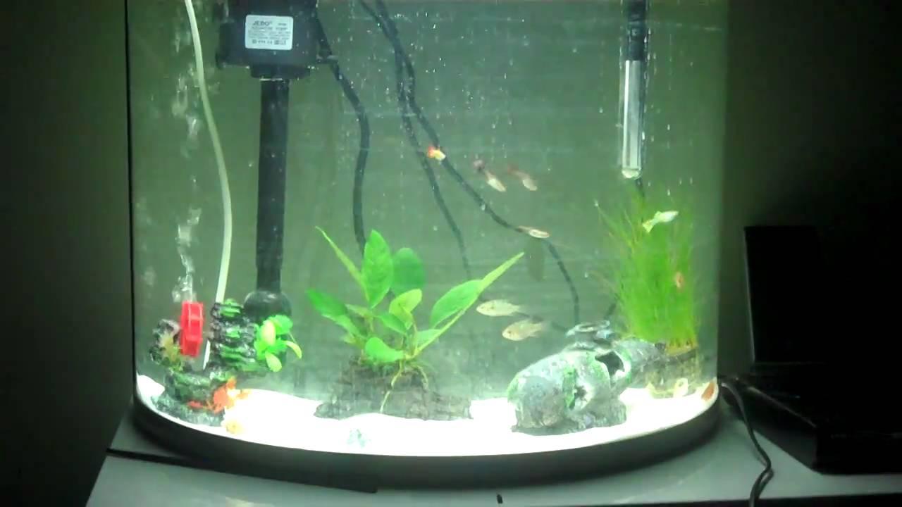 jebo r760 62 liter tropical aquarium setup with blue ram