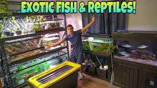 EXOTIC Fish and Reptiles House TOUR!!