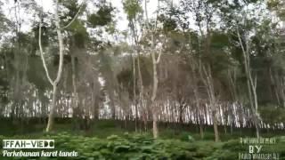 Perkebunan Karet