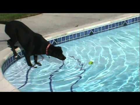 My 1 Year Old Lab/Pitbull Mix Rocky Jumping and Having Fun In The Pool!!! Part 1
