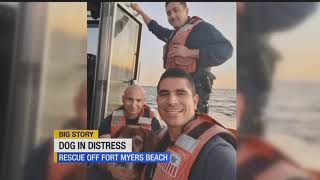 WATCH: Coast Guard saves dog stranded off Fort Myers Beach