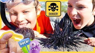 CATCH AND COOK - Eating VENOMOUS Sea Urchin (GOT SPIKED😱)