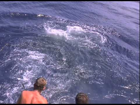 Swordfish ATTACKS Catch 22!