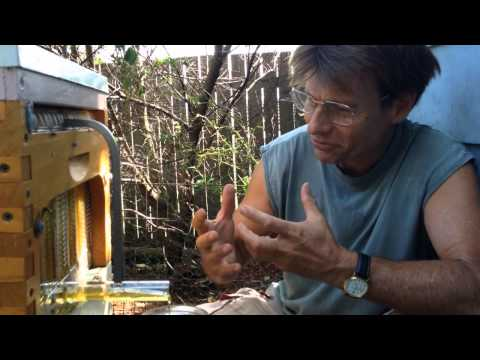 What Bee Keepers Are Saying About Flow™ Hives