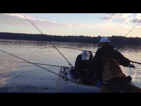 озера для ловли щуки в лен обл