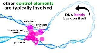 Regulation of Gene Expression: Operons, Epigenetics, and Transcription Factors